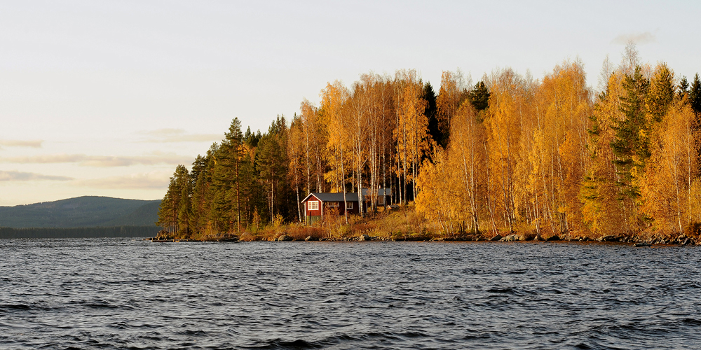 Birches in autumn, Sweden · Fotograf: Torsten Stoll · neoton photography