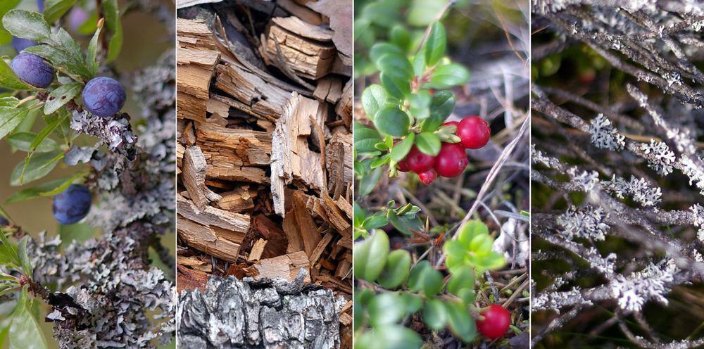 Wood and Shrubs in Arlanda · Fotograf: Torsten Stoll · neoton photography